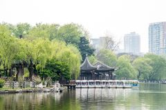 Willow tree in park Stock Photos