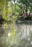 Willow tree Stock Photo