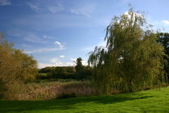 Willow tree by pond. Countryside scene in East Sussex, UK royalty free stock photo