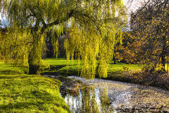 Willow tree by the Pond Royalty Free Stock Photos