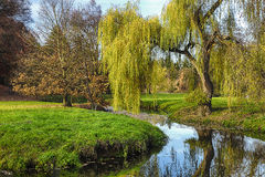 Willow tree by the Pond Royalty Free Stock Photography