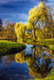 Willow tree by the Pond Royalty Free Stock Images