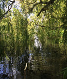 WILLOW TREE REFLECTION Stock Photography