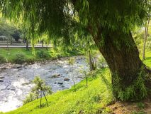 Willow Tree on Rio Tomebamba in Cuenca Ecuador. View of a willow tree as you look at the green landscape along the river on a bright and sunny afternoon. The stock photography