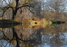 Willow tree and river. Big willow tree and a fall river Stock Photo