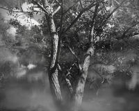 Willow tree on the river Royalty Free Stock Photo