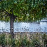 Willow tree on Rivers edge. Willow tree in the autumn on the edge of a river in Milwaukee Wisconsin Stock Photography