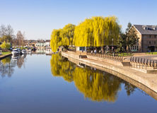 Willow Tree at the Riverside Stock Image