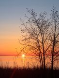 Willow tree at sunrise Royalty Free Stock Image