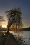 Willow Tree Sunset Stock Image