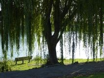 Willow Tree und Bank Lizenzfreies Stockfoto