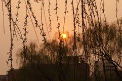 Willow Tree- und Sun-Satz lizenzfreie stockfotos