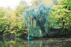 Willow tree under water Royalty Free Stock Image