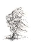 Willow tree in the wind Japanese style sumi-e ink painting. Royalty Free Stock Photo