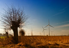 Willow tree and windmills Stock Image
