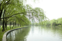 Willow trees along riverbank Stock Image