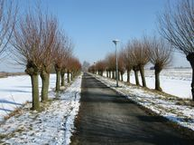 Willow trees along a road in perspective Stock Photography