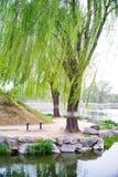 Willow Trees bij Yuan Ming Yuan & x28; De zomer Palace& x29; , Peking, China Stock Afbeeldingen