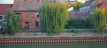 Willow trees in front of houses on a river bank.  stock images