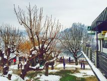 Willow Trees, lac saigné, photos stock