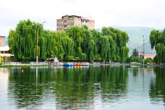 Willow trees at the lake Royalty Free Stock Photo