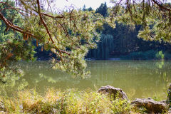Willow trees at the lake with reflection Royalty Free Stock Photography