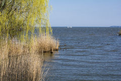 Willow trees and lake Stock Image
