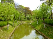 Willow trees lining a small stream park Royalty Free Stock Images