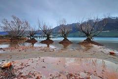 Willow Trees in Meer Wakatipu, Glenorchy Queenstown Royalty-vrije Stock Foto
