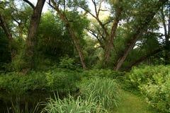 Willow Trees Overlooking uma lagoa Imagens de Stock Royalty Free