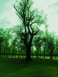 Willow Tress In Forest Nursery In Kashmir Valley la India imagen de archivo
