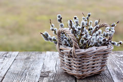 Willow Twigs Bouquet Royalty Free Stock Images