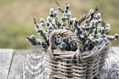 Willow Twigs Bouquet Stock Images