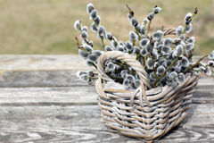 Willow Twigs Bouquet Stock Photos