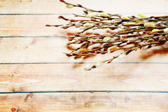 Willow twigs on wooden background Royalty Free Stock Images