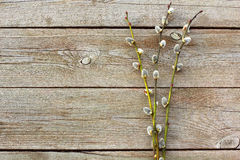 Willow twigs on wooden table Stock Photo