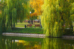 Willow and two benches near the pond. Reflected in water.Novodevichy big pond.Moscow Stock Photography