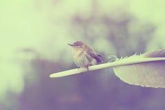 Willow Warbler Stockfotografie