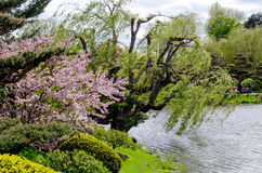 Willow by the water. A beautiful weeping willow dips into a small lake, surrounded by beautiful flowering trees in this lovely garden Stock Photos