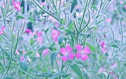 Willowherb de oleandro Imagem de Stock