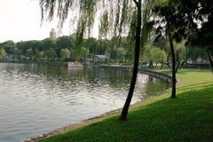 Willowing позволяя на озере в зеленом цвете стоковое изображение rf