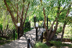 Willows around footbridge. In a summer park Royalty Free Stock Photo
