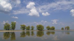 Willows Around Lake. Beautiful willow growing on the bank of a lake stock video footage