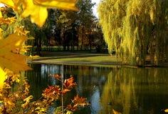 Willows autumn season. Royalty Free Stock Photography