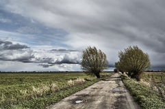 Willows on a dirt road on a rainy day. In Poland stock image