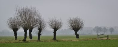 Willows with fence Stock Photography