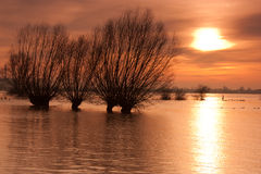 Willows in the flood Royalty Free Stock Photography