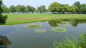 Willows with grassland in west lake Stock Image