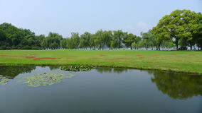 Willows with grassland in west lake Royalty Free Stock Photography