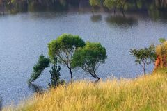 Willows growing in the lake Stock Photos